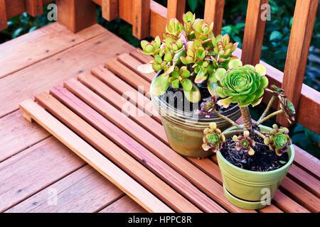 Las plantas suculentas en una baraja de Redwood