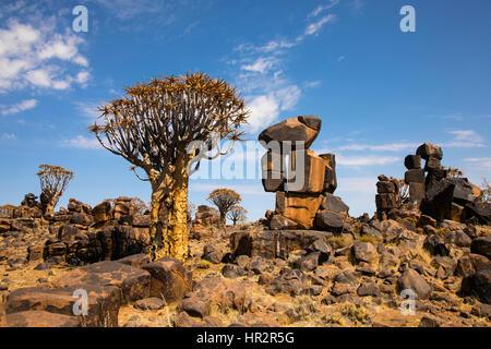 El carcaj de árbol, Bosque Kocurboom establecería, Aloe dichotoma sitio fósil Mesosaurus, Keetmanshoop, Namibia, por Monika Hrdinova/Dembinsky Foto Assoc