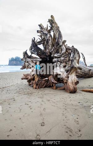 Una mujer sentada en el interior de las raíces de un árbol gigante en la segunda playa driftwood, cerca de la costa de Washington Push.