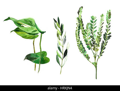 Pintura de hojas verdes Foto & Imagen De Stock: 62172618 - Alamy