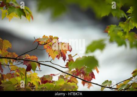 Colores de otoño a lo largo del río Oxtongue Oxtongue Rapids Park, Ontario, Canadá