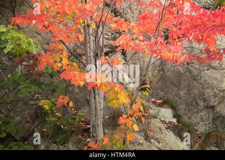 Colores de otoño los halos Frood lago Whitefish, nr Falls, distrito de Sudbury, Ontario, Canadá