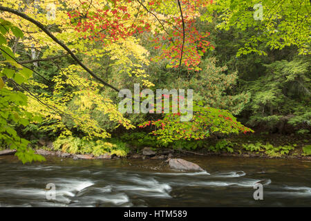 Colores de otoño a lo largo del río Oxtongue en Ragged Falls Provincial Park, Ontario, Canadá