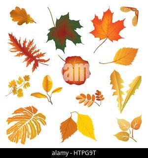 La naturaleza caída de la hoja de hierba de conjunto de iconos Firmar hojas de otoño temporada florales aislados Foto de stock
