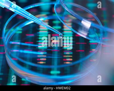 La investigación genética, un humano se muestra pipetted en una placa de Petri para análisis genético sentado en la secuencia de ADN