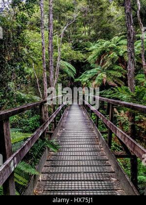 Puente en la pista de Charlotte djungle NZ
