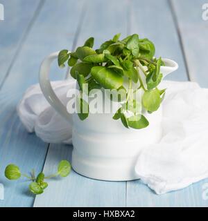 Berro fresco en una jarra con muselina blanca