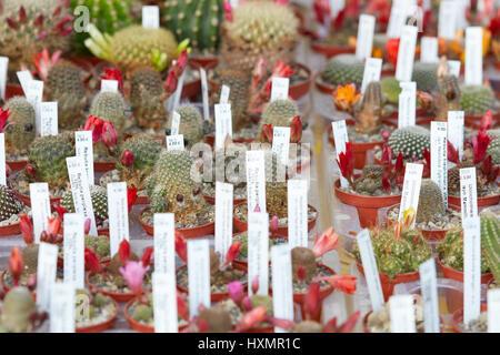 Colección de plantas suculentas en pequeños potes con etiquetas en un vivero Foto de stock