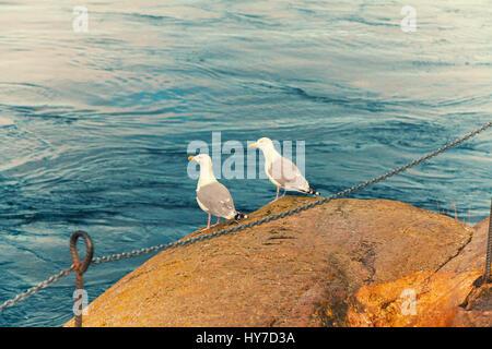 Dos gaviotas sentado sobre una roca en el mar