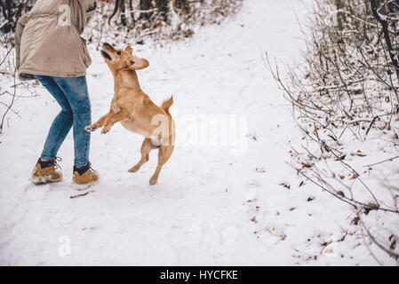Chica senderismo en el bosque de invierno blanco con perro