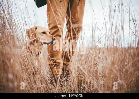 Caminante y perro de pie en la hierba alta