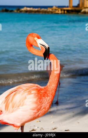 Las mejores playas de Aruba: Playa Flamingo del Hotel Renaissance