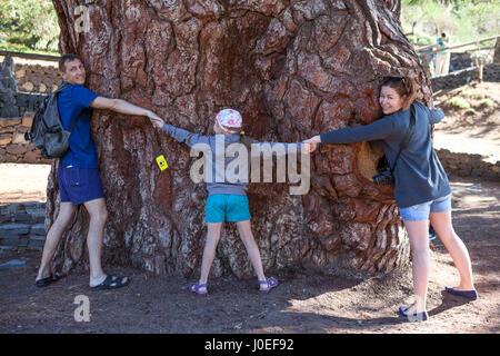 Papá, Mamá e hija abrazando todos juntos con las manos el pino gigante en Vilaflor. Tenerife, Islas Canarias, España