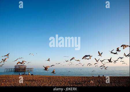 Una bandada de gaviotas sobrevuela la playa de Brighton, en la costa sur de Inglaterra, con las ruinas del famoso West Pier en el fondo.