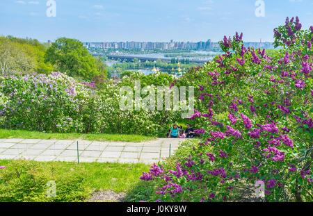 KIEV, Ucrania - Mayo 2, 2016: Jardín Botánico se vuelve muy popular durante el Lilac Blossom, el 2 de mayo, en Kiev Foto de stock