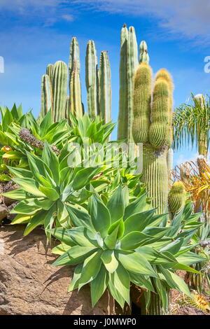 Jardín de Cactus, Gran Canaria, España
