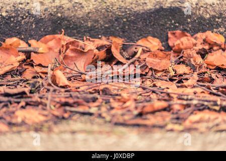 Caído y hojas secas en una calle junto a la acera en otoño y el otoño en Vancouver, Canadá.
