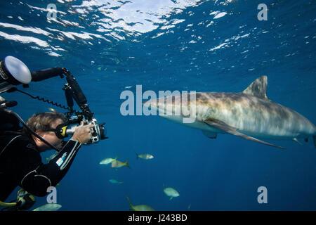Fotógrafo submarino con tiburón sedoso.