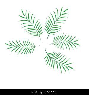 Conjunto de hoja de palma vector ilustración aislada Foto de stock