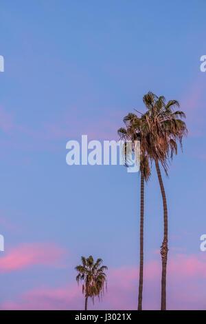 Alto y delgado tres palmeras en California con rosa púrpura sunset sky en segundo plano.