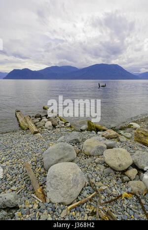 Siberia, verano. El lago Teletskoye viejo muelle destruido
