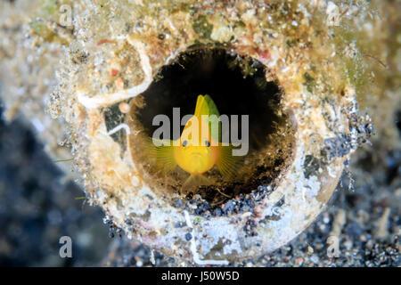 Un Goby en una botella de vidrio desechados en los fondos marinos