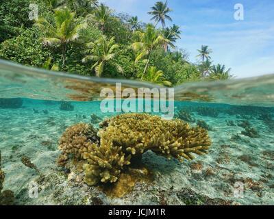 Por debajo de la superficie del mar cerca de una costa con exuberante vegetación tropical y Acropora submarino coral dividida por flotación, Tahaa, Pacífico, la Polinesia Francesa