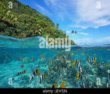 Sobre y bajo el mar cerca de la orilla de un exuberante costa salvaje con una escuela de peces tropicales underwater dividida por flotación, Huahine island, Océano Pacífico