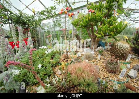 Una vasta colección de cactus y suculentas crecen en una cálida y soleada alféizar de la ventana en un invernadero interno en un jardín inglés, REINO UNIDO