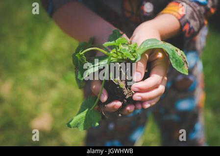 Las manos del niño mantenga una planta con suelo bajo ella.