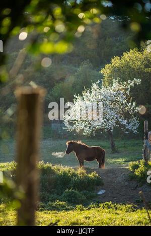Caballo en el jardín, en el camino el camino de Santiago de Compostela, cerca de Zubiri, España, Europa.
