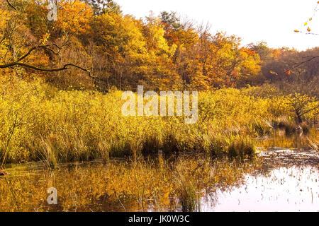 Zona de la orilla de un estanque del bosque en medio de un descanso en otoño de color madera, eines uferbereich waldweihers eines inmitten bruchwaldes en herbstfarben