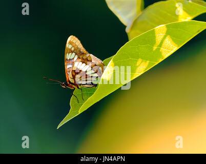Solo mariposa sobre una hoja con fondo borroso