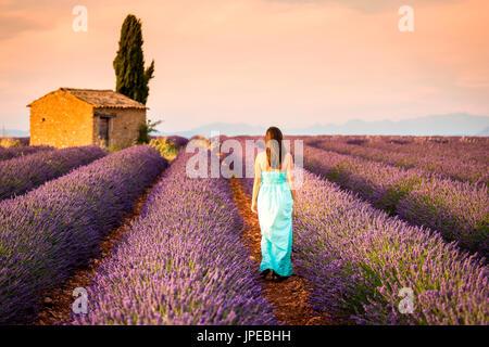 Valensole meseta, Provence, Francia. Joven al atardecer en un campo de lavanda en flor