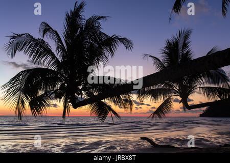 Palmeras durante la puesta de sol en una hermosa playa tropical en la isla de Koh Kood, en Tailandia