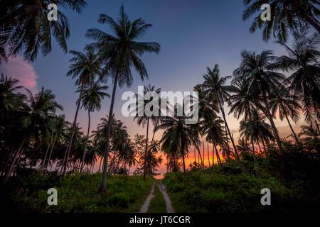 Palmeras siluetas durante un colorido atardecer tropical en la playa Nathon, Laem Yai, Koh Samui, Tailandia Foto de stock