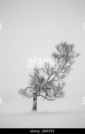 Solitario árbol pie en las fuertes nevadas