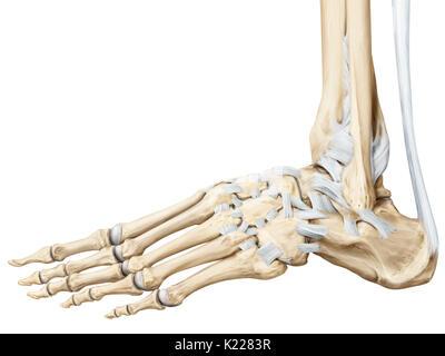 Los huesos de la muñeca Foto & Imagen De Stock: 13174764 - Alamy