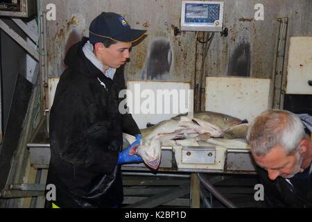 Joven pescador trabajando en el pez-hold en un barco arrastrero del Mar del Norte. De julio de 2016.