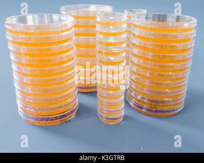 Montón de petri con crecientes cultivos de microorganismos, hongos y microbios. Una placa Petri ( Petrie dish) conocido como una placa de Petri o cell-cultura di