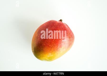 Un mango aislado en blanco Foto de stock