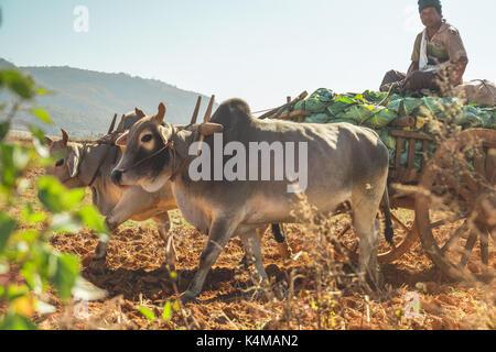 En el estado de Shan, Myanmar, 26 de diciembre de 2013. La vida real en las zonas rurales del estado de Shan, Myanmar, Birmania.