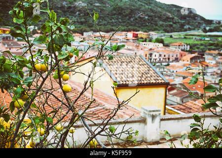 Lemon Tree y tejados de la ciudad medieval de Bosa, Cerdeña, Italia