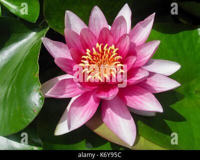 Flora portuguesa, flor, planta