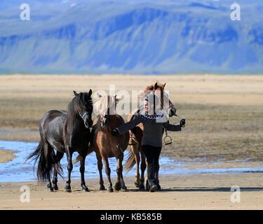 Cabalgatas en la playa longufjordur, península de Snaefellsnes, Islandia