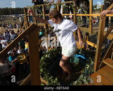 Crimea, Rusia. 30 sep, 2017. Una mujer winefest stomps uvas en la vendimia y elaboración del vino en el festival Foto de stock