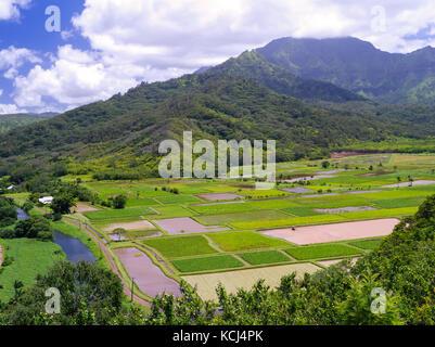 Vista de taro arrozales en el valle de Hanalei, cerca de Princeville, en Kauai, Hawaii, EEUU.