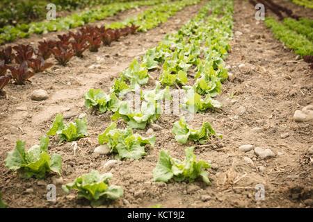 Green pequeño arbolito crece desde el suelo en la casa verde