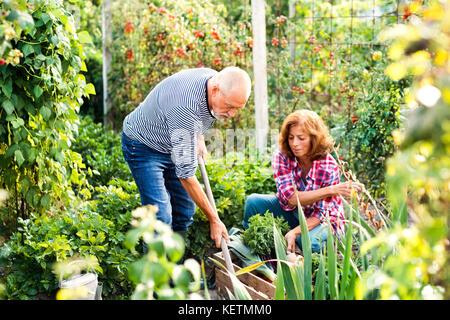 Pareja senior de jardinería en el patio jardín.