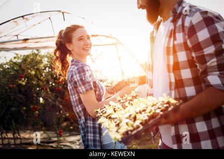 Imagen del par de agricultores coles de plántulas en el jardín